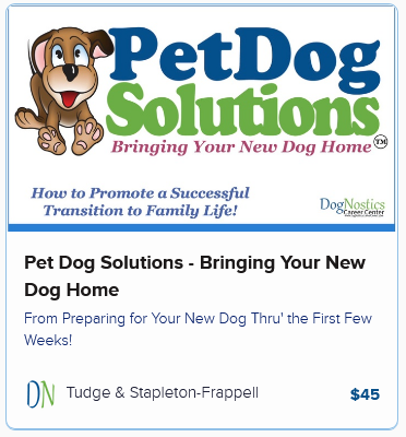 Pet Dog Solutions – Bringing Your New Dog Home