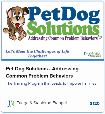 Pet Dog Solutions – Addressing Common Problem Behaviors