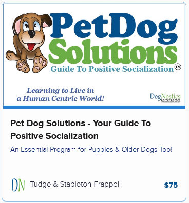 Pet Dog Solutions – Your Guide to Positive Socialization
